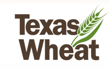 Texas Wheat